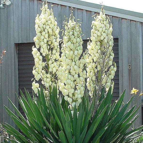 Plant Finder | Conserve Castle Rock, CO